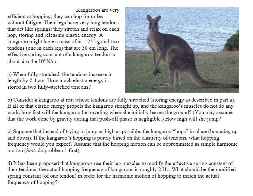 K is for the kangaroo sex position, karezza and kink