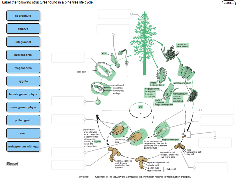 Tree Cycle Diagram Schematics Online