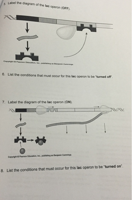 Solved Label The Diagram Of The Lac Operon Off List Th