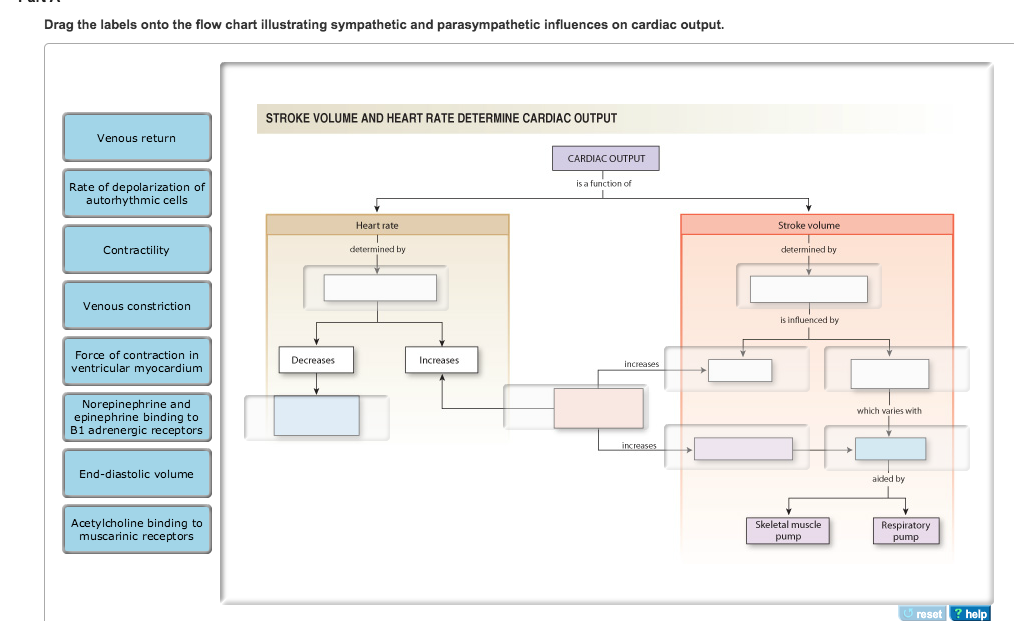Solved Drag The Labels Onto The Flow Chart Illustrating S
