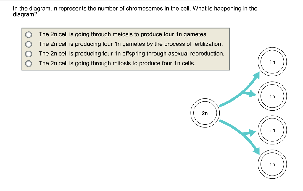 Solved Ldentify The Stages Of Meiosis On The Diagram Telo