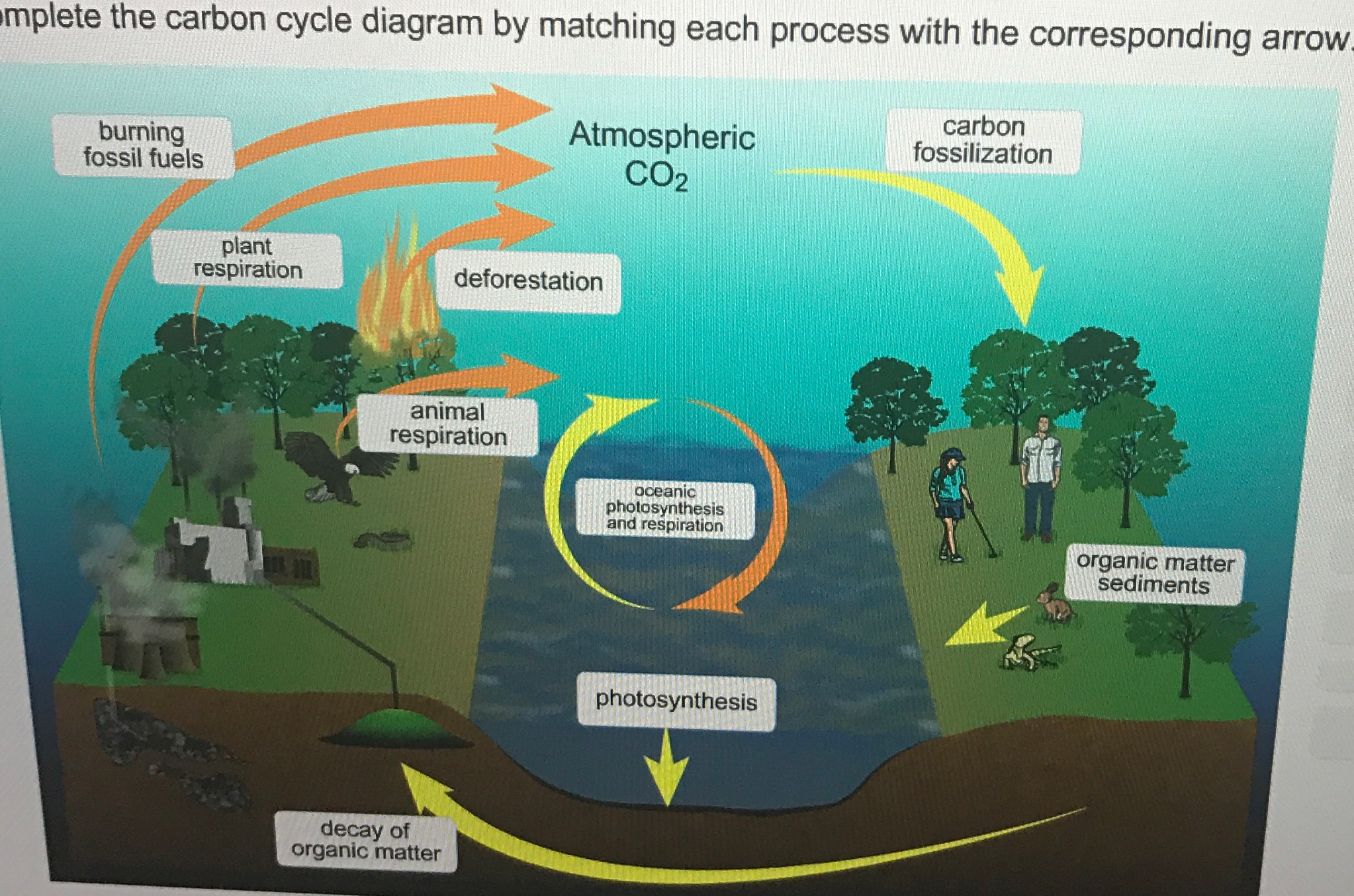 Solved complete the carbon cycle diagram by matching each see more show transcribed image text complete the carbon cycle diagram by matching each process with the corresponding arrow complete the carbon cycle ccuart Gallery