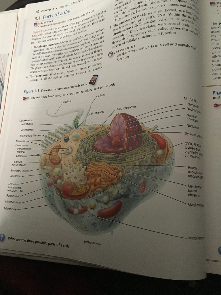 Anatomy And Physiology Archive | February 03, 2018 | Chegg.com