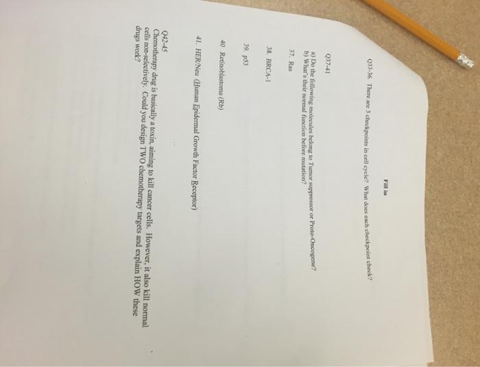 custom write an essay environment day