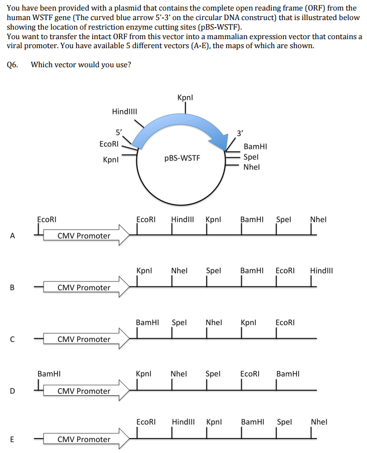 Solved: You Have Been Provided With A Plasmid That Contain ...