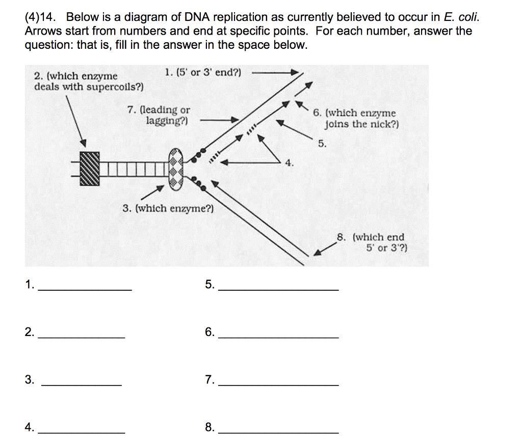 Solved 414 below is a diagram of dna replication as cu below is a diagram of dna replication as currently believed to ccuart Image collections