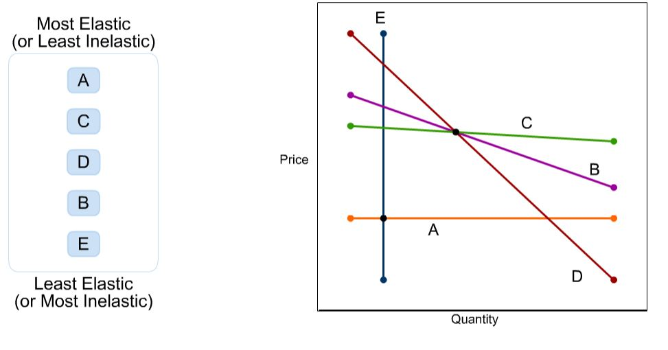 Solved The Graph Below Depicts Five Demand Curves Please Chegg Com