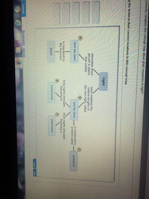Solved Correctly Complete This Concept Map About Plant Re