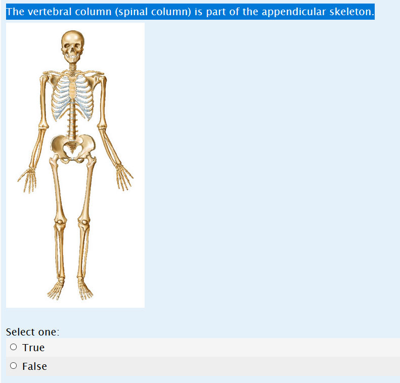 Solved The Vertebral Column Spinal Column Is Part Of Th