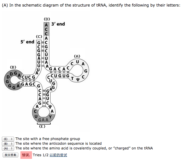 solved in the schematic diagram of the structure of trna rh chegg com Light Bulb Circuit Diagram Circuit Diagram Symbols