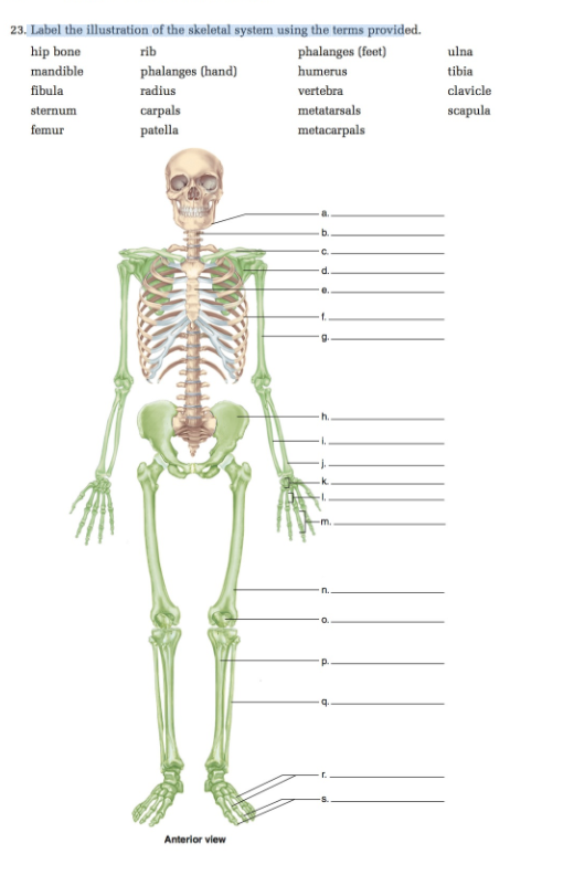 Solved label the illustration of the skeletal system usin label the illustration of the skeletal system using the terms provided hip bone ccuart Images