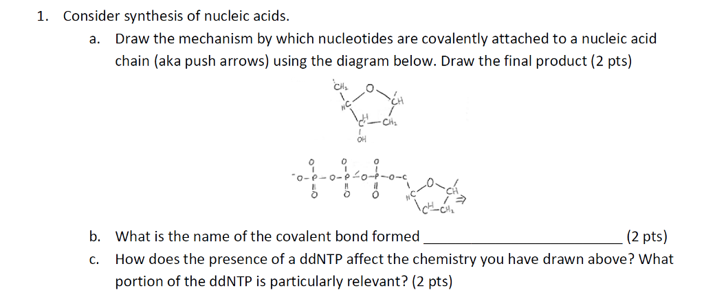 Solved 1 Consider Synthesis Of Nucleic Acids Draw The M