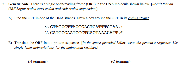 Solved: There Is A Single Open-reading Frame (ORF) In The ...