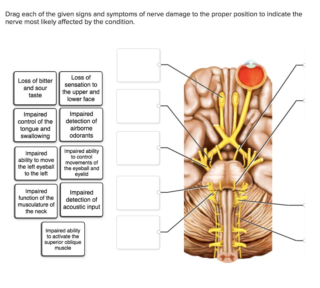 Nerve damage numbs orgasm — 3