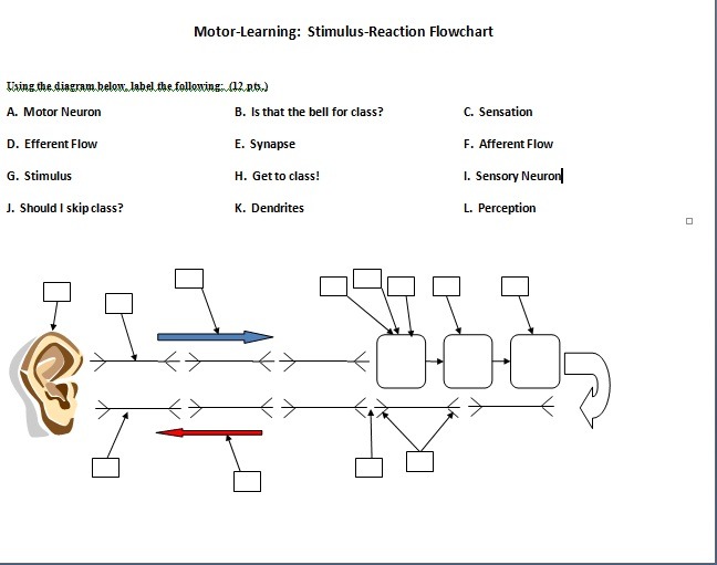 Using the diagram below label the following a m chegg question using the diagram below label the following a motor neuron b is that the bell for class c ccuart Images
