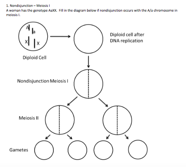 nondisjunction meiosis a woman has the genotype aaxx  fill in the diagram  below