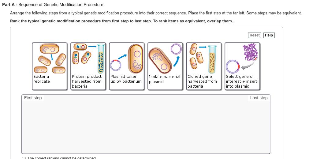 sequence of genetic modification procedure arrange chegg com