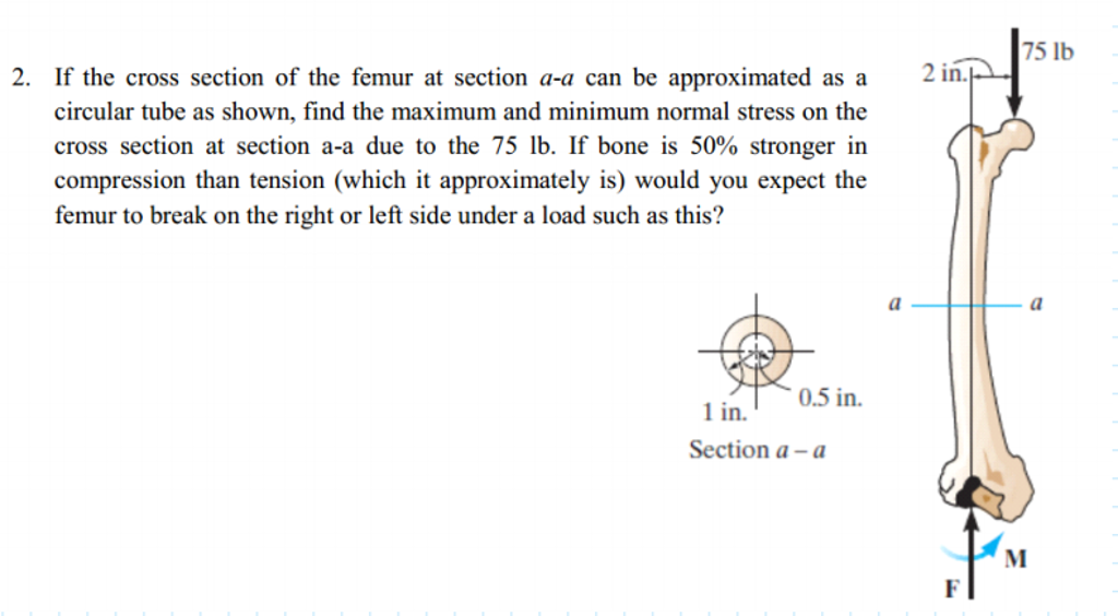 Solved If The Cross Section Of The Femur At Section A A C