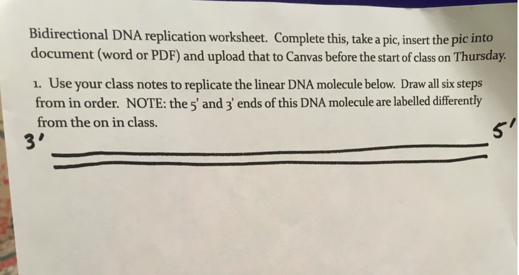 Solved Use Your Class Notes To Replicate The Linear Dna M