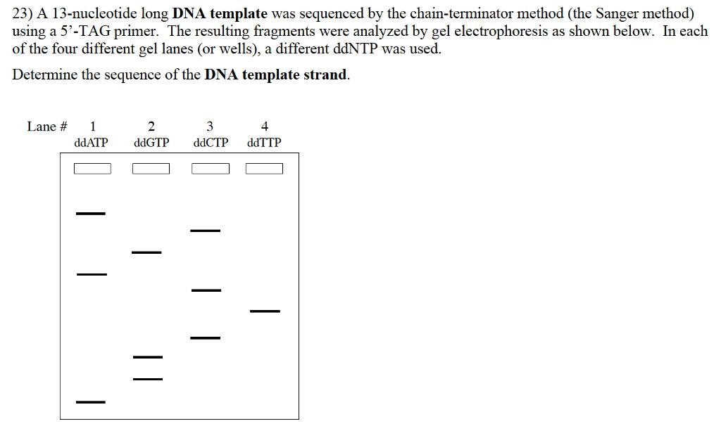 cladogram template