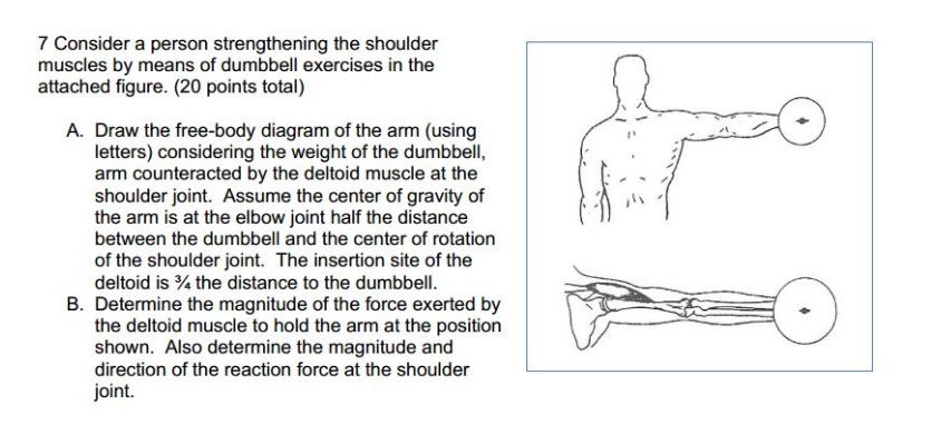 Solved: Consider A Person Strengthening The Shoulder Muscl ...