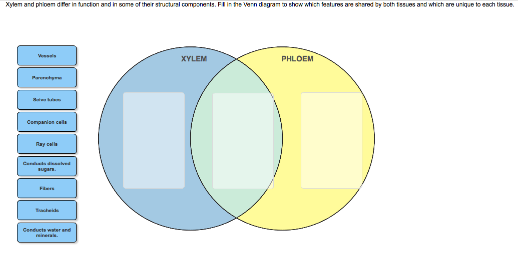 Solved Xylem And Phloem Differ In Function And In Some Of