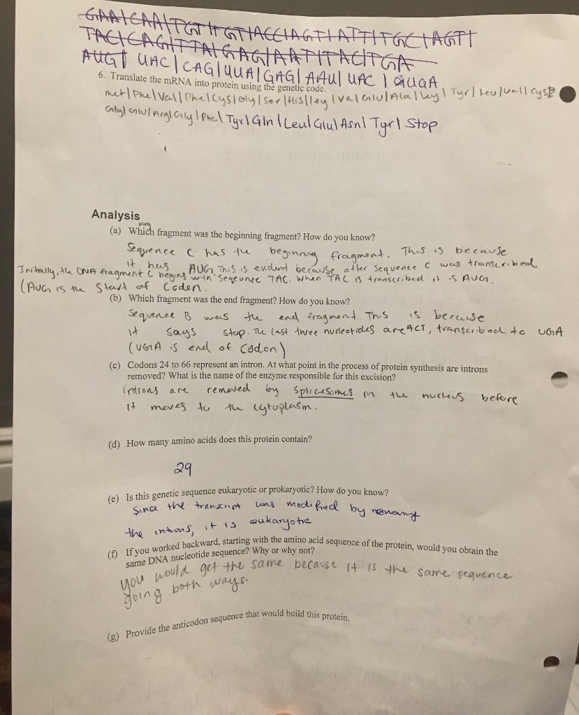Protein Synthesis Simulation Worksheet Answers - Worksheet ...