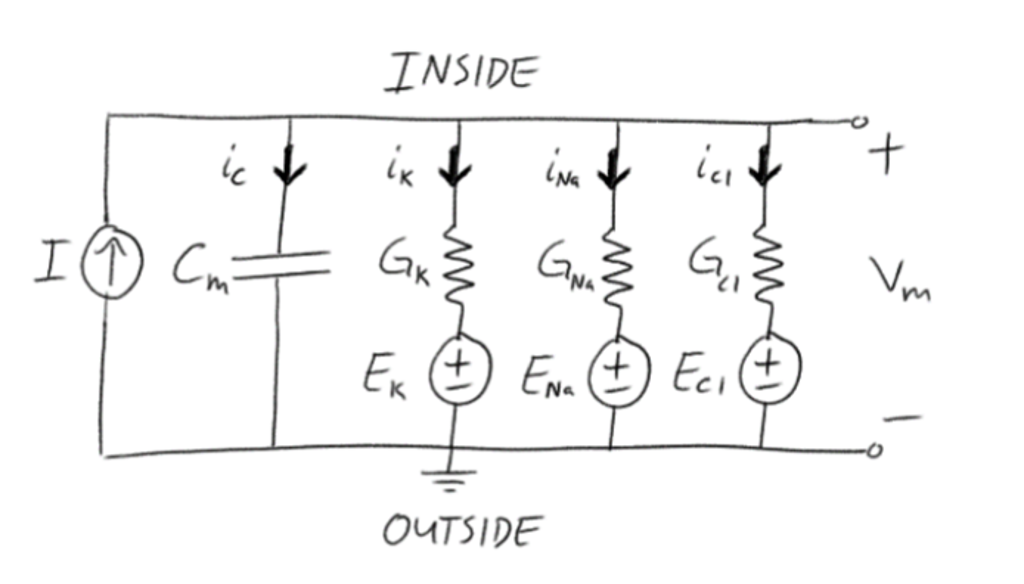 Rc Circuit Neuron - Wiring Diagram •