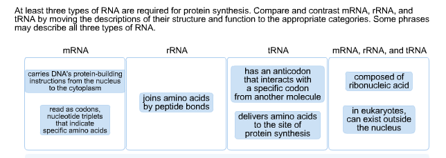 explain the role of trna in protein synthesis