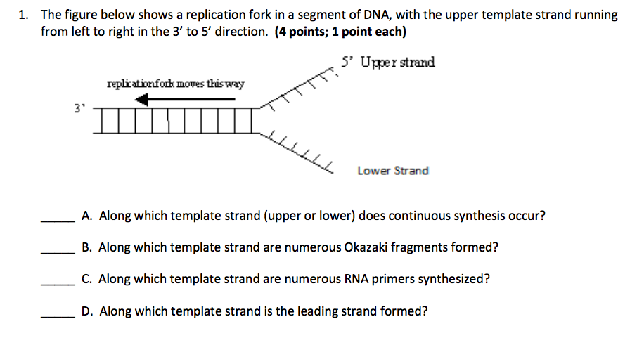 solved the figure below shows a replication fork in a seg