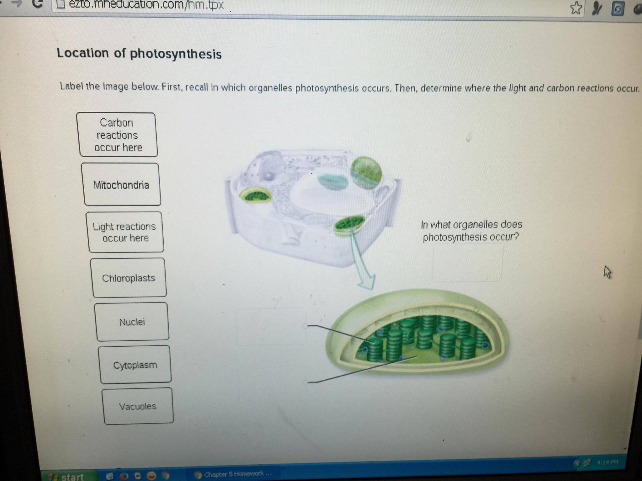Occur in organelle does what photosynthesis