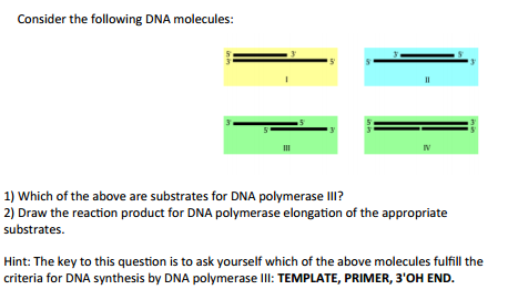 consider the following dna molecules 1 which of the above are substrates for dna