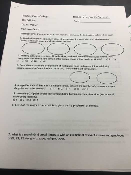 what are all the stages of mitosis
