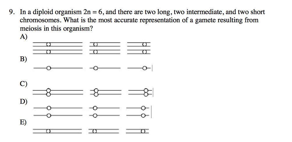 In A Diploid Organism 2n 6 And There Are Two Lo
