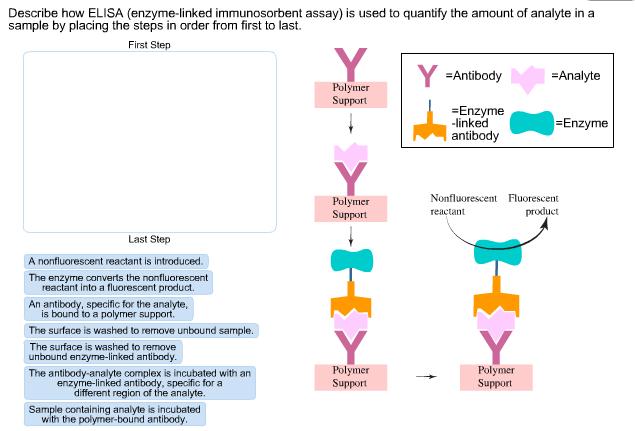 describe how elisa (enzyme-linked immunosorbent as