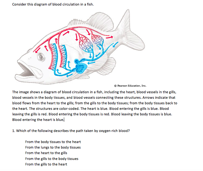 Solved hi so im a little confused on these questions t consider this diagram of blood circulation in a fish pearson education inc the ccuart Gallery