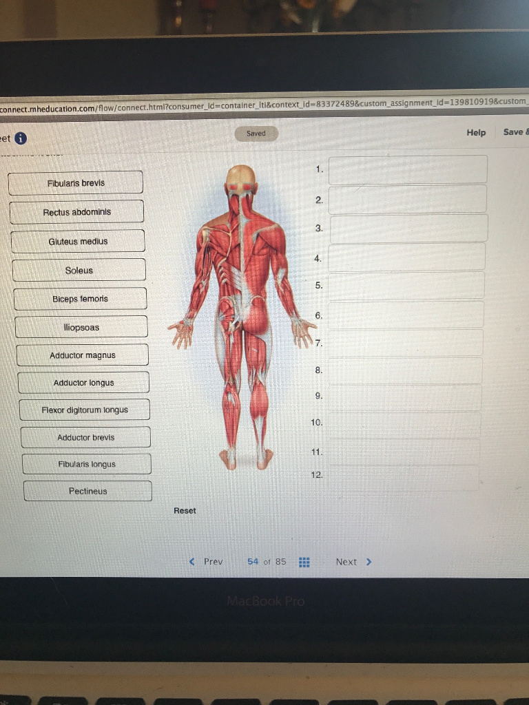 Solved: Place The Following Muscles In Order Based On Thei ...