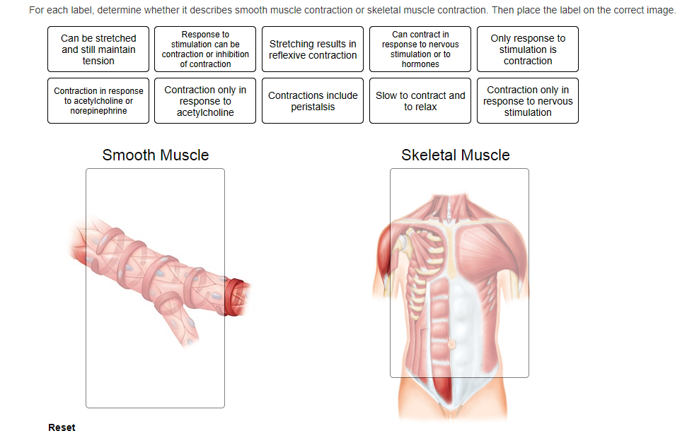 Diagram Of Skeletal Muscles Listed Correctly - Wiring Diagram ...