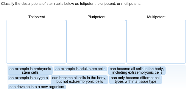 difference between totipotent and pluripotent stem cells
