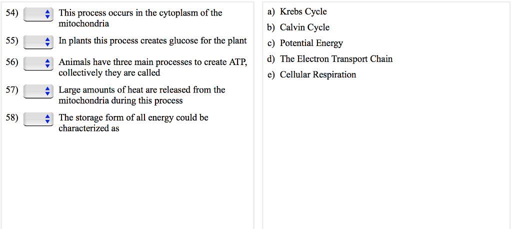 calvin cycle vs krebs cycle