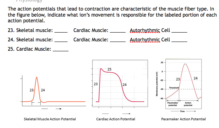 Solved the action potentials that lead to contraction are question the action potentials that lead to contraction are characteristic of the muscle fiber type in th ccuart Choice Image