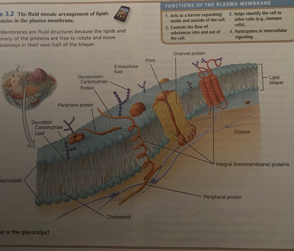 Solved: Exercise 4-1 Organelles And Cell Structures Name O ...