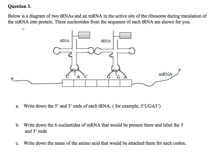 media%2F730%2F730d2e7c 6310 4704 bfbb 6dd1e77dbab4%2FphpMOdnnD solved question 3 below is a diagram of two trnas and an