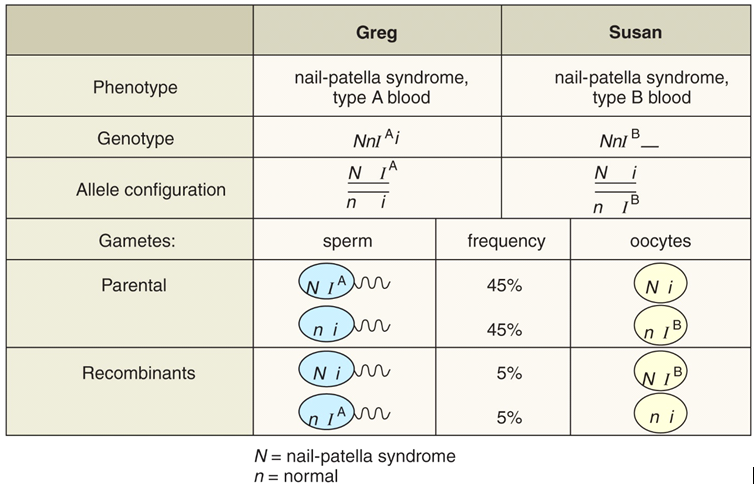Solved: The Nail-patella Syndrome Is Inherited In An Autos ...