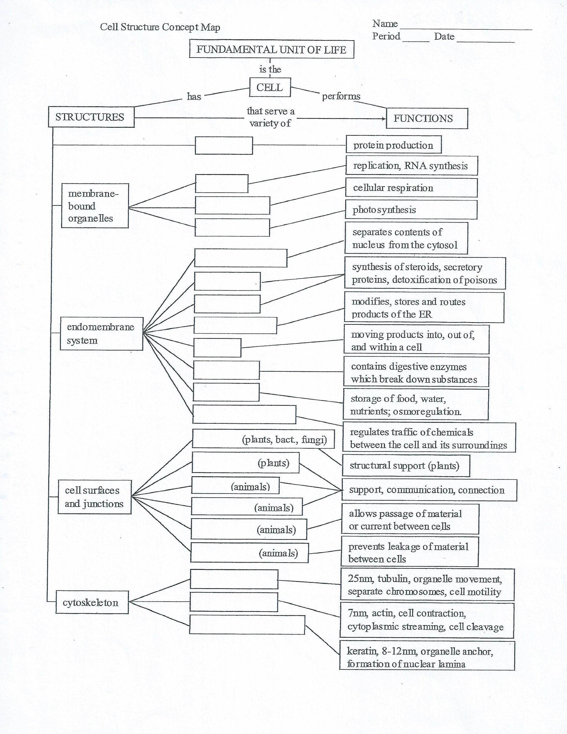 Cell Structure Concept Map Solved: Name Period Cell Structure Concept Map Date FUNDAM
