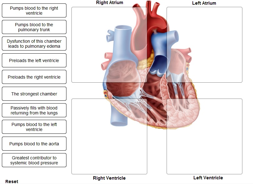 Solved indicate the heart chamber responsible for the giv image for indicate the heart chamber responsible for the given function pumps blood to the ccuart Choice Image