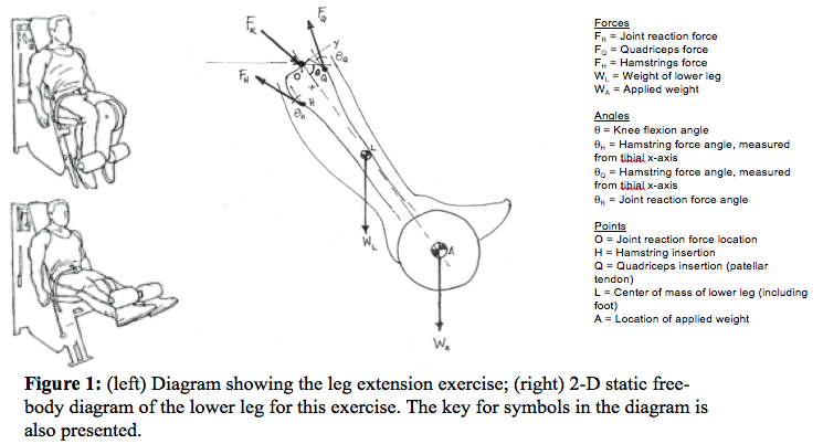 Awhat assumptions went into simplifying the leg e chegg what assumptions went into simplifying the leg extension exercise into the static free body diagram in figure 1b state all assumptions clearly ccuart Image collections