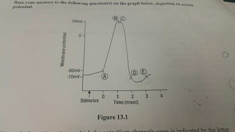 Solved In The Graph Which Point Does The Sodium Ion Chan