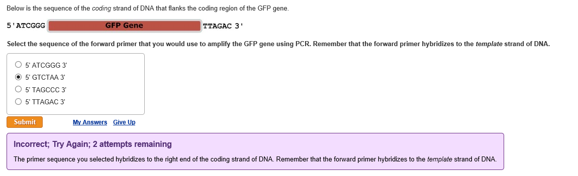 Solved Below Is The Sequence Of The Coding Strand Of Dna