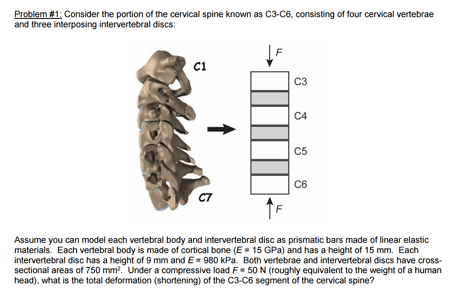 Solved Assume You Can Model Each Vertebral Body And Inter